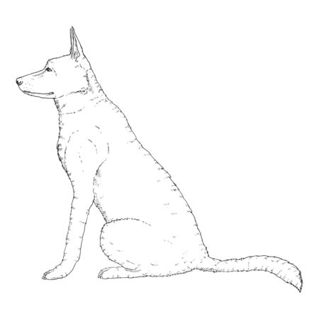 Vector Sketch Sitting German Shepherd Dog Illustration