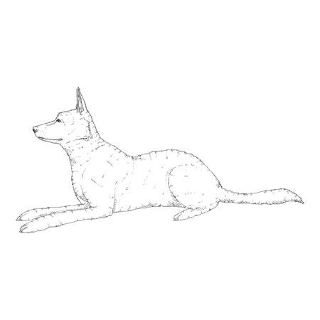 Vector Sketch Lying German Shepherd Dog Illustration Illustration