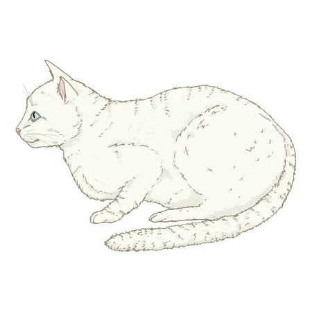 White Angora Cat. Vector Single Cartoon Illustration