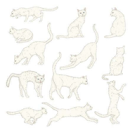 Vector Set of Cartoon White Cats. Different Feline Poses and Variation.