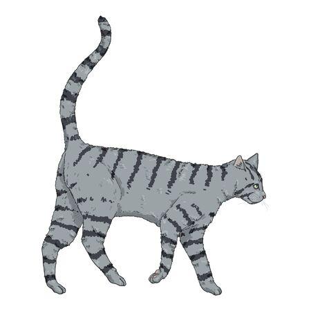 Walking Gray Striped Cat. Vector Cartoon Illustration Reklamní fotografie - 138389512