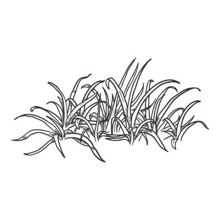 Vector Hand Drawn Sketch Wild Growth Grass Ilustração