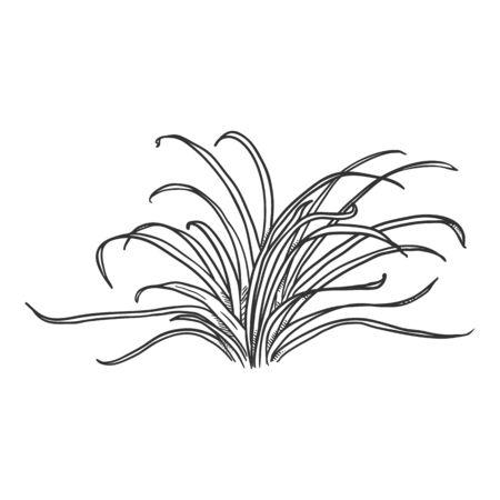 Vector Hand Drawn Sketch Wild Growth Grass Illustration