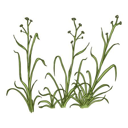 Vector Cartoon Wild Growth Green Grass on White Background Ilustração