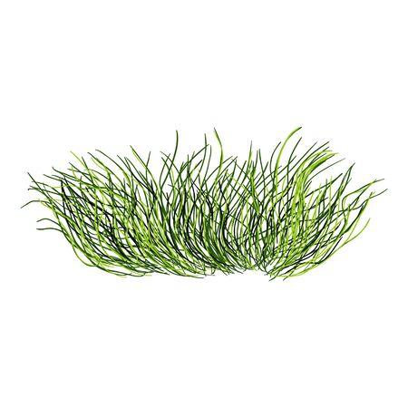 Vector Cartoon Wild Growth Green Grass on White Background Illustration