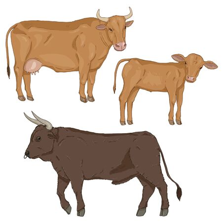 Vector Set of Cartoon Cattle. Farm Animals Illustration. Calf, Cow and Bull