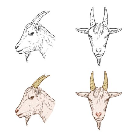 Vector Set of Goat Heads. Sketch and Cartoon Illustrations.