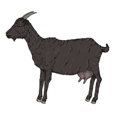 Vector Cartoon Black Goat. Side View She-goat Illustration