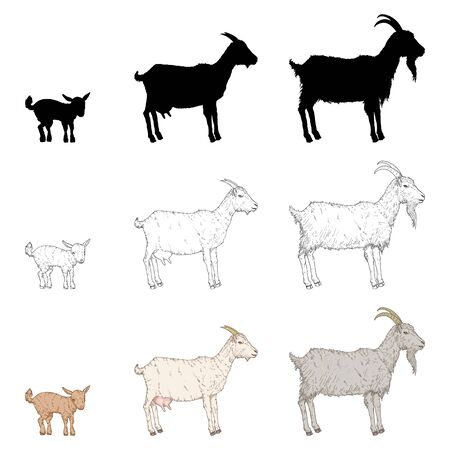 Vector Set of Goats. Silhouette, Sketch and Cartoon Illustrations. Baby and Adult Farm Animals.