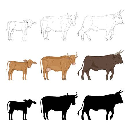 Cow, Bull and Calf. Vector Sketch, Cartoon and Silhouette Illustration Set.