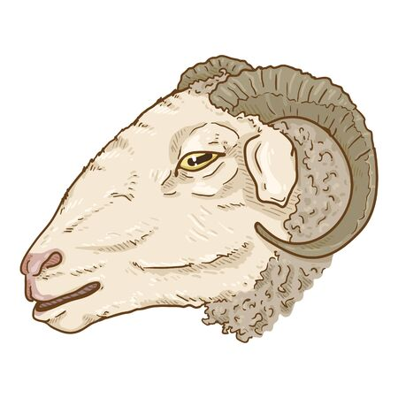 Vector Cartoon Ram Head Illustration. Side View