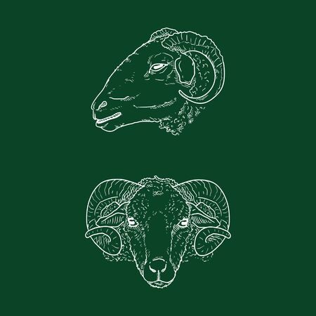 Vector Chalk Sketch Ram Head Illustrations