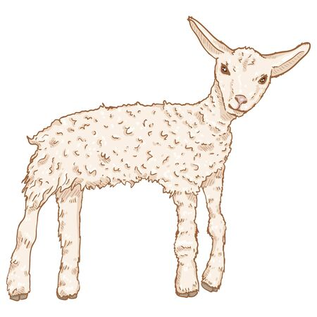 Vector Cartoon Lamb Illustration. Baby Sheep