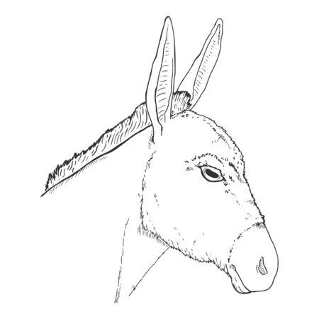 Vector Sketch Donkey Head. Side View Illustration.  イラスト・ベクター素材