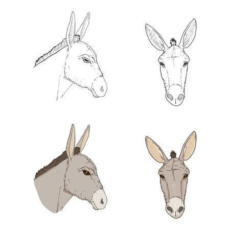 Vector Set of Donkey Head Illustrations. Side and Front View. Sketch and Cartoon Style.