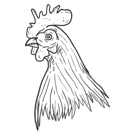 Vector Sketch Rooster Head on White Background