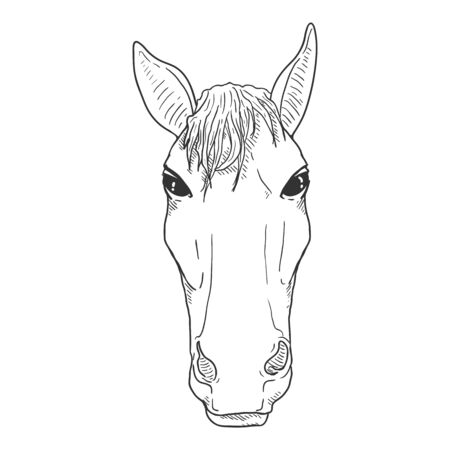 Vector Sketch Horse Head. Front View Equine Portrait.  イラスト・ベクター素材