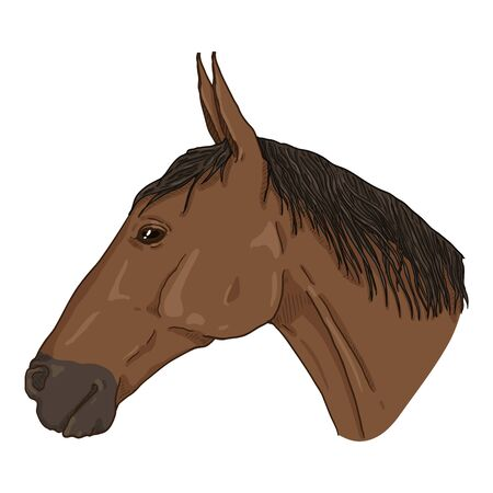 Vector Sketch Horse Head. Side View Equine Portrait.