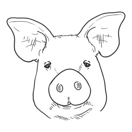 Vector Sketch Pig Face. Front View