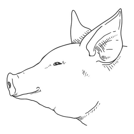 Vector Sketch Pig Face. Side View.