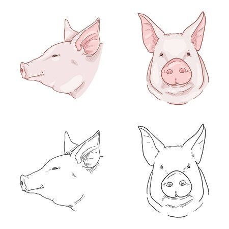 Vector Cartoon and Sketch Set of Pig Faces. Side and Front View Piglets Heads.