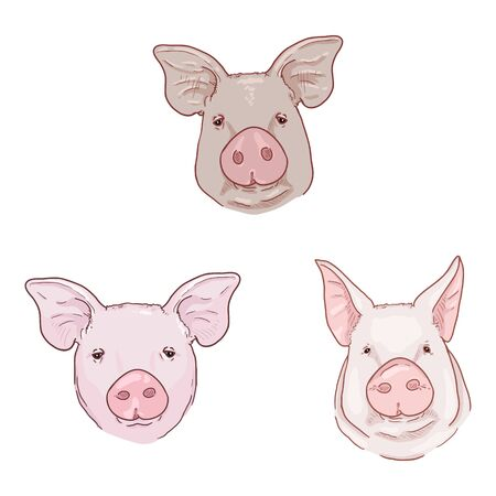 Vector Cartoon Set of Pig Faces Illustrations
