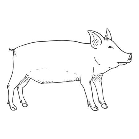 Vector Hand Drawn Sketch Piglet Illustration