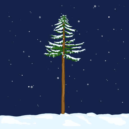Vector Cartoon Evergreen Pine Tree in Snowy Winter Night. Evergreen Conifer Tree