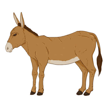 Cartoon Brown Donkey. Vector Hand Drawn Illustration. Illustration