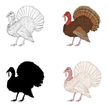 Vector Set of Turkey Illustrations. Sketch, Cartoon and Silhouette Farm Bird Illustration.