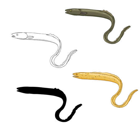 Vector Set of Eel Fish Illustrations. Sketch, Cartoon and Silhouette Images. Illustration