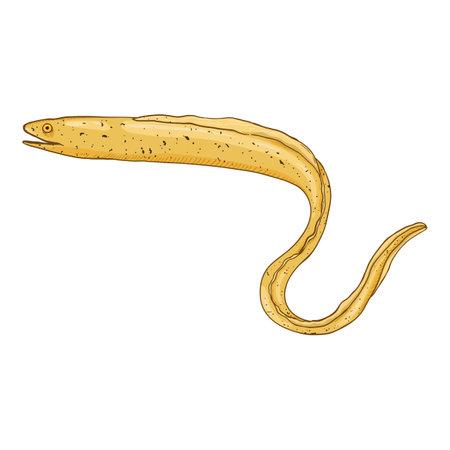 Vector Cartoon Yellow Eel Illustration on White Background