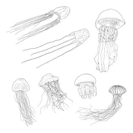 Vector Set of Sketch Jellyfish Illustrations Illustration