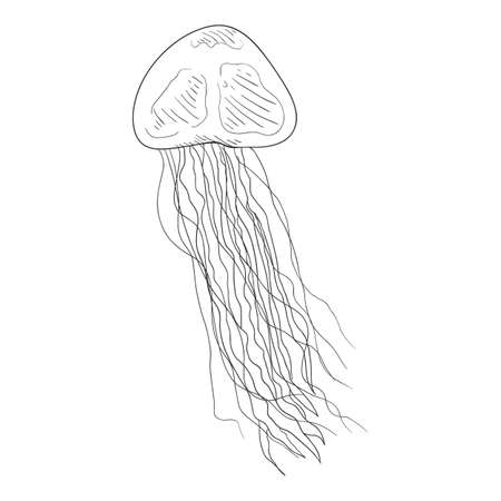Vector Sketch Jellyfish on White Background