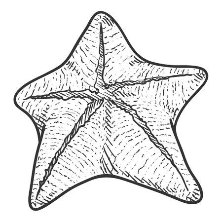 Vector Hand Drawn Sketch Starfish Illustration