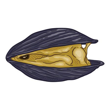 Vector Cartoon Open Mussel Illustration Vettoriali