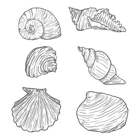 Vector Set of Sketch Seashells on White Background.