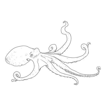 Vector Sketch Octopus. Cephalopod Illustration.