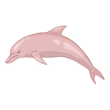 Vector Cartoon Pink Dolphin Illustration on White Background