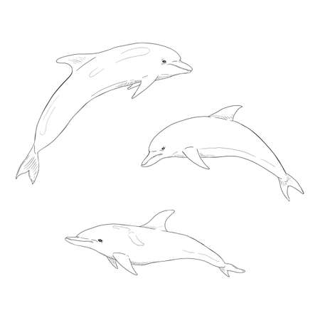 Vector Set of Sketch Dolphin Illustrations