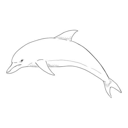 Vector Sketch Dolphin Illustration on White Background 向量圖像