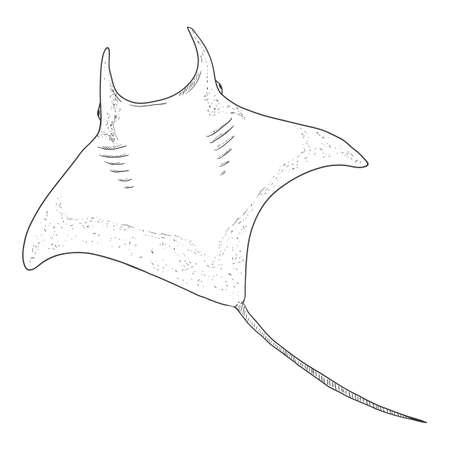 Sketch Manta Ray. Hand Drawn Devilfish Drawing.Numb-fish Vector Illustration