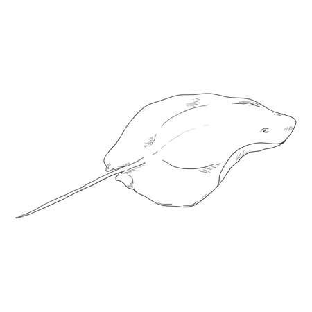 Sketch Stingray. Hand Drawn Numb-fish Vector Illustration