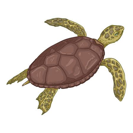 Cartoon Sea Turtle. Vector Illustration of Eretmochelys Imbricata