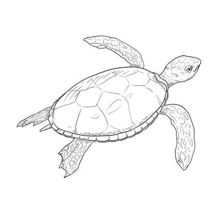 Sketch Sea Turtle. Vector Hand Drawn Illustration of Eretmochelys Imbricata Ilustración de vector