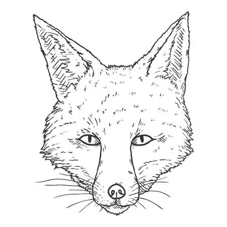 Fox Head. Vector Sketch Illustration of Front View Vixen Face