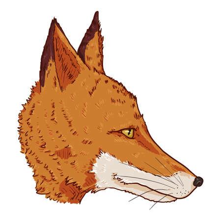 Fox Head. Vector Cartoon Illustration of Side View Vixen Face