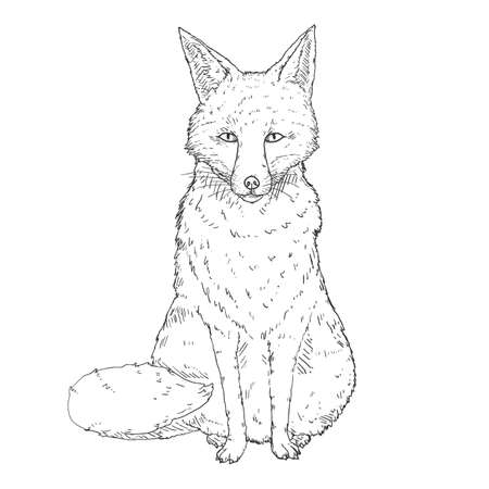 Sketch Sitting Fox. Front View. Hand Drawn Vector Illustration.