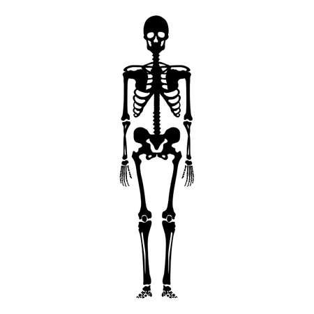 Vector Black Silhouette Skeleton. Front View. Anatomical Illustration Vektorgrafik