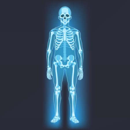 Vector Human Skeleton. X-ray Illustration on Dark Background Vektorgrafik
